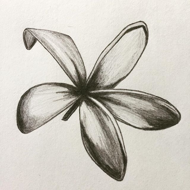 #plumeria #flowers #drawing #arttherapy #hanalokahi #hanalokahitherapy #mistygibson