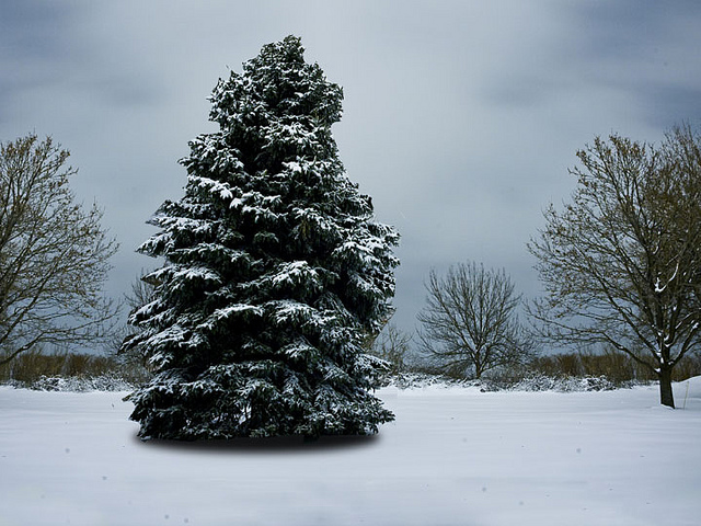 i-pine-2@2x-published-on-Flickr-by-peapod-labs.jpg