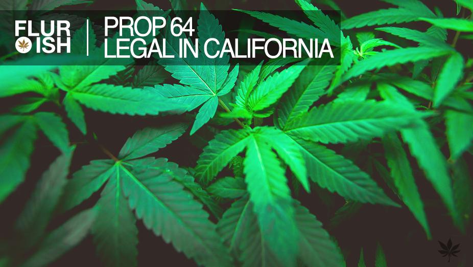 Flurish Group   Prop 64   Marijuana Legalization