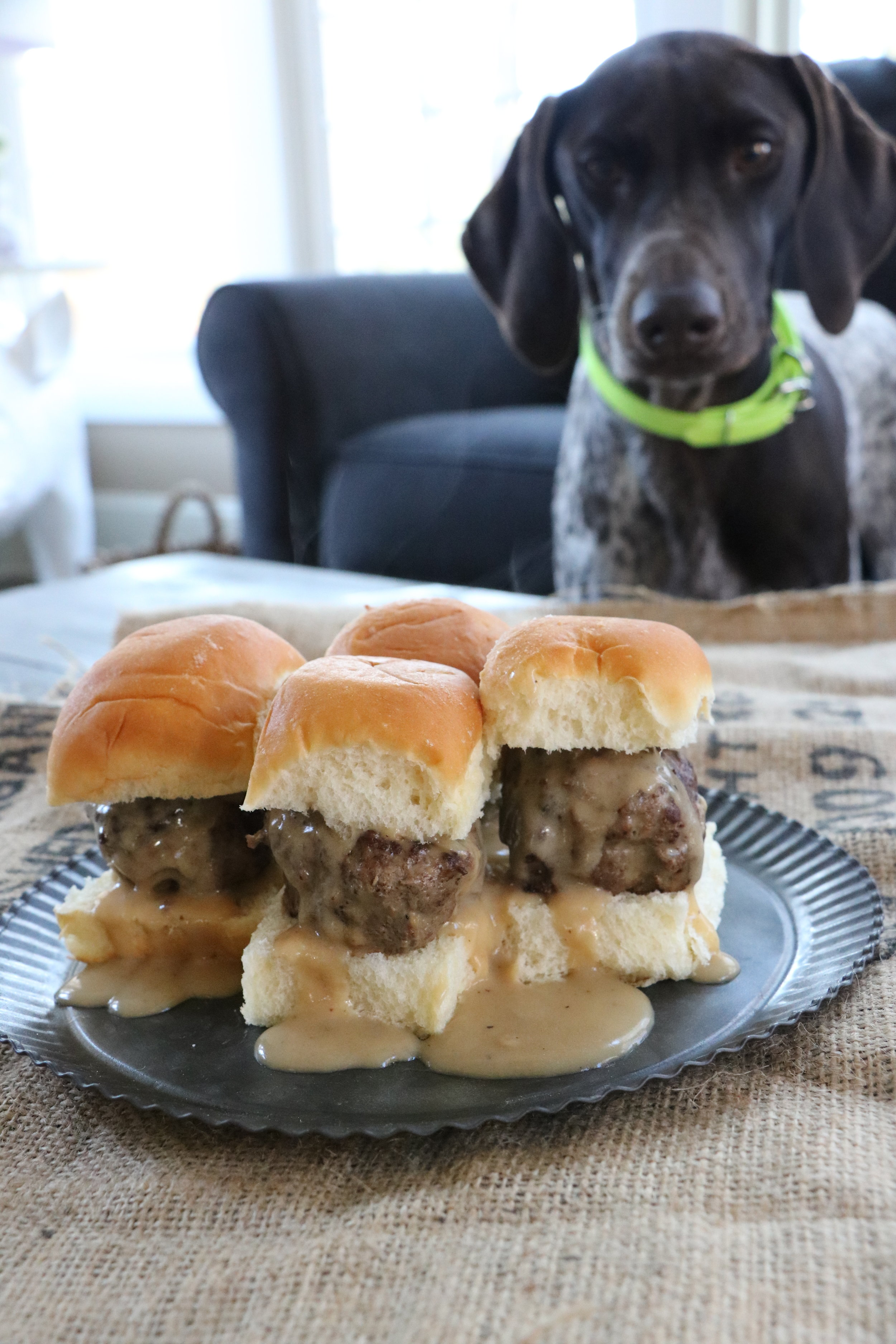 So Yummy.... - Even my sidekick Remi wanted in on the Swiss Elk Slider action!