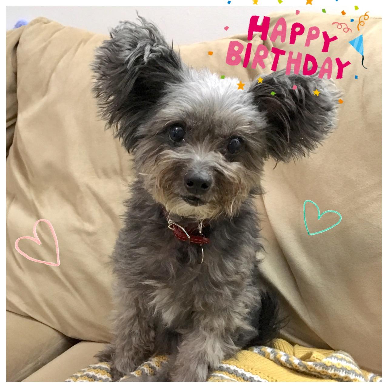 Momiji had her Birthday on Dec 30. She turned 10 years old!