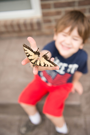 Eastern Swallowtail butterfly landing on your hand is even more amazing than it looks - Lisa Villella Photography - www.lisavillellaphotography.com