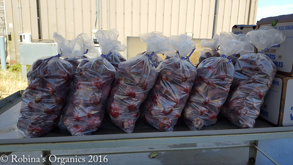 Beet Harvest.jpg