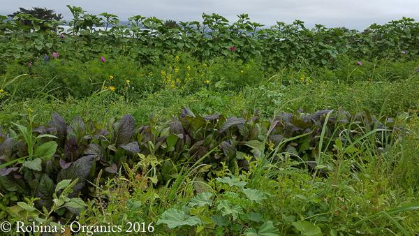 Before Broccoli.jpg