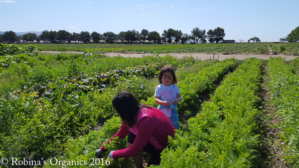 Isabel and Ariana weeding Carrots.jpg