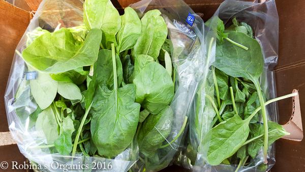 Spinach (1).jpg