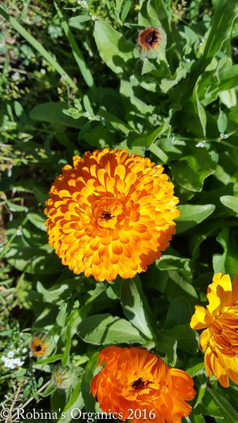 Farm Flower.jpg