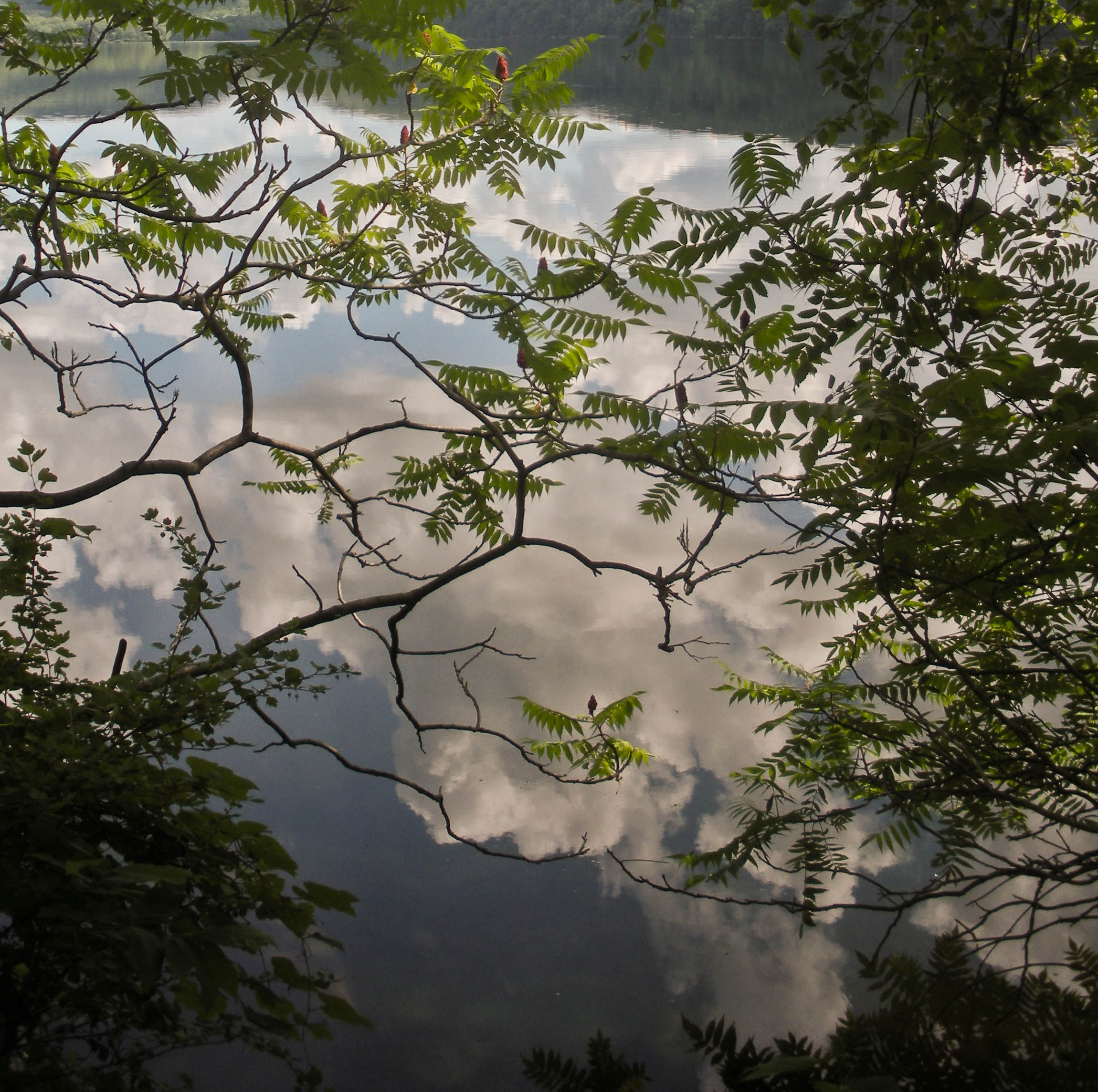 "...and a ""confusing"" picture of sky, lake, nature, reflections and upside-downs at Sterling Lake, NY. ;)"