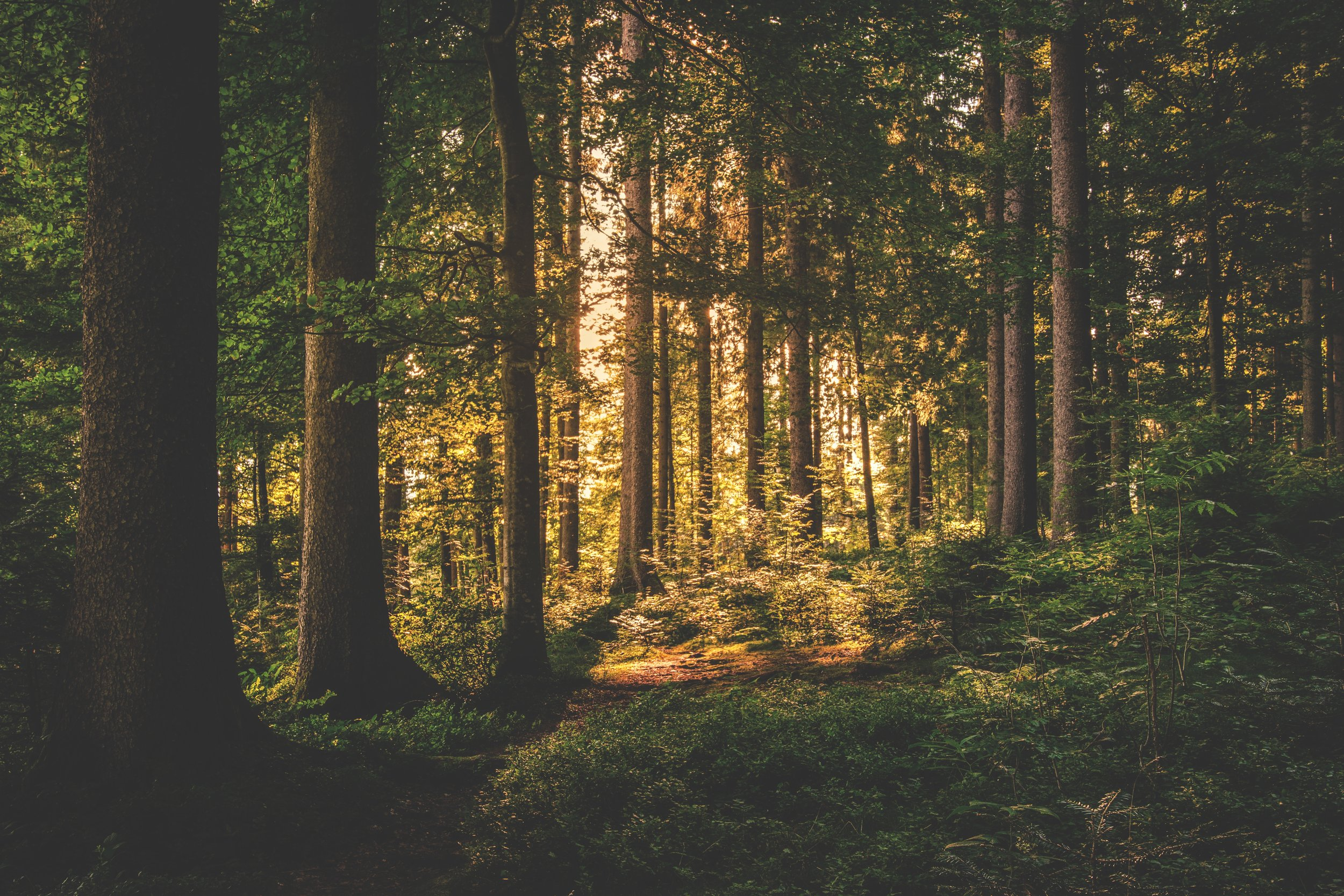 NORD-T forest