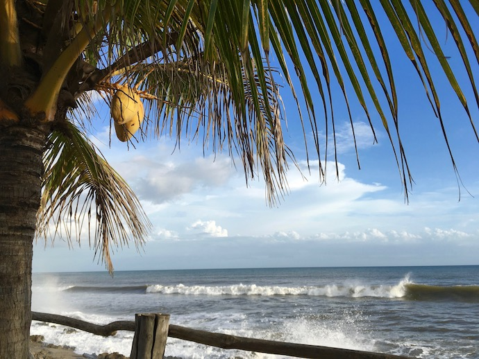 Palm tree and Surf