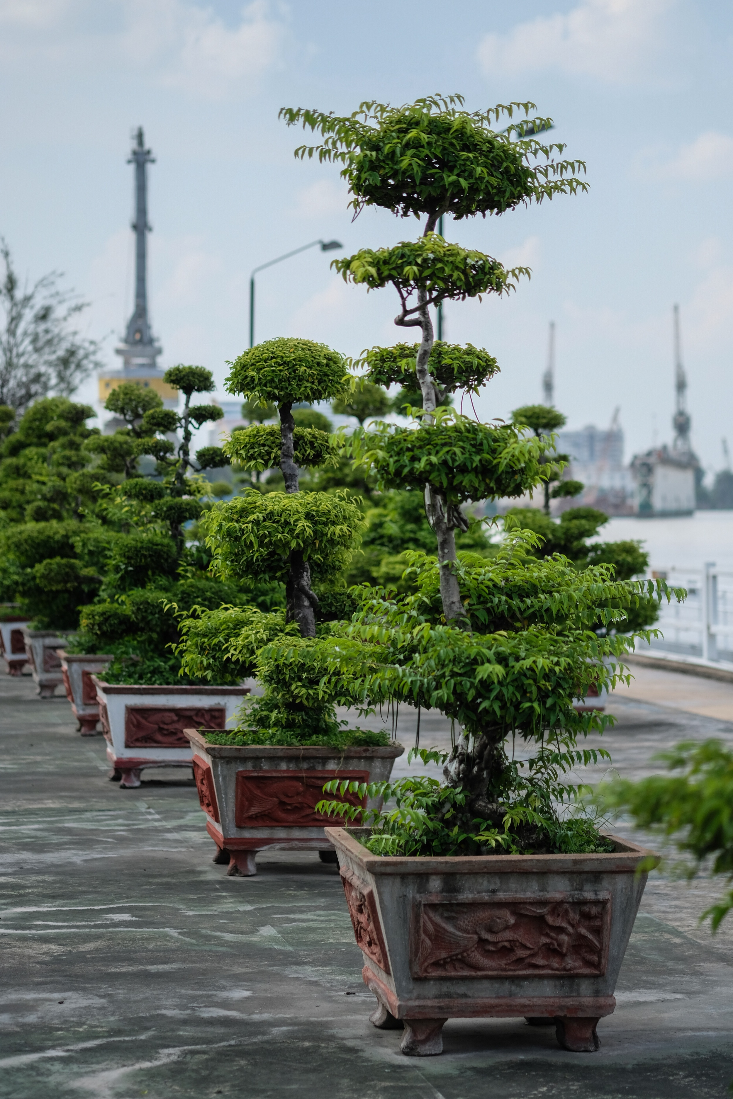 Potted trees along the Saigon River.  The whole city is very lush, with parks and planted trees.