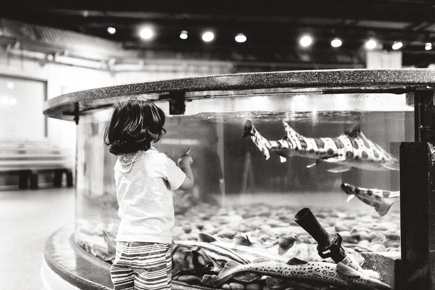 Lifestyle-Photographer-Columbus-Ohio-Newport-Aquarium-Erika-Venci-Photography