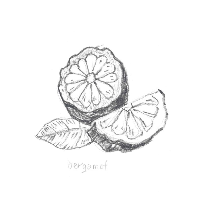 BERGAMOT: Cleanses, refreshes and calms irritated or inflamed skin. It's antiseptic properties are ideal for soothing skin conditions like psoriasis and also ridding infections.