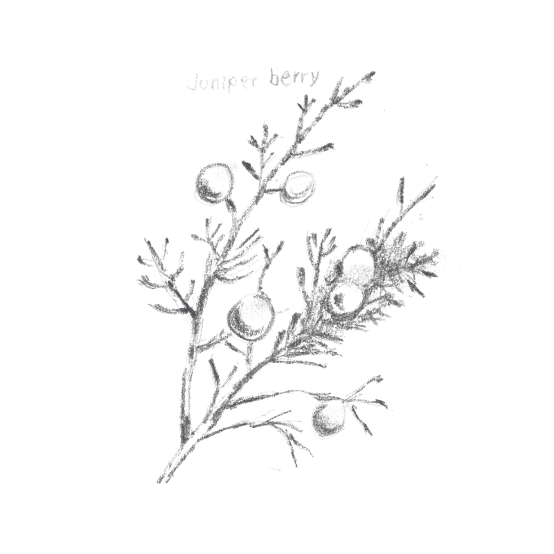 JUNIPER BERRY: The powerful antiseptic quality is very effective in treating oily, congested, acne prone skin and balancing dry skin patches.