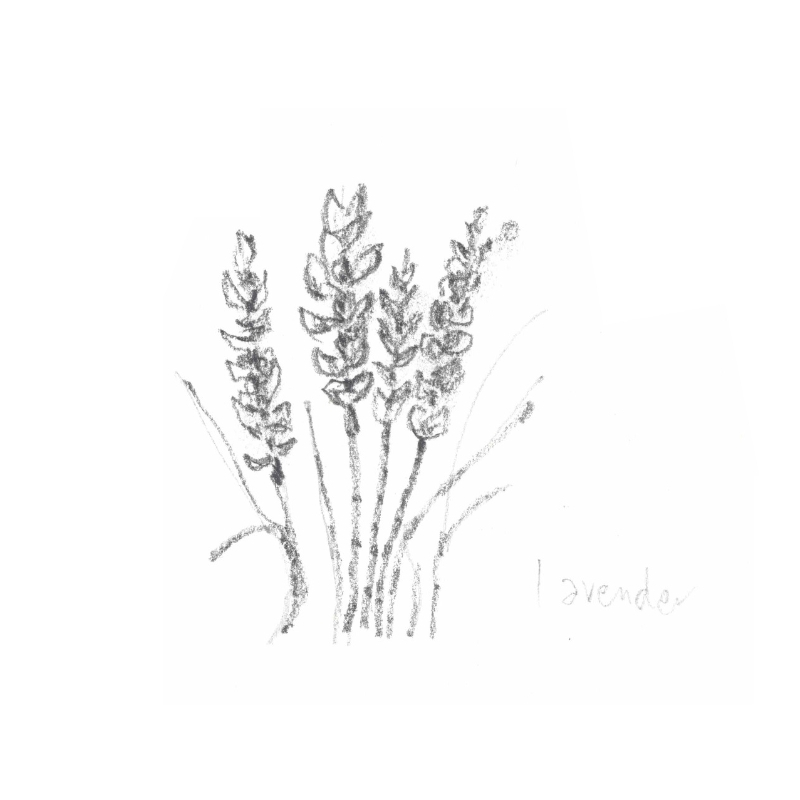 LAVENDER: Known best for it's calming attributes, lavender oil is also balancing and soothing for irritated skin.