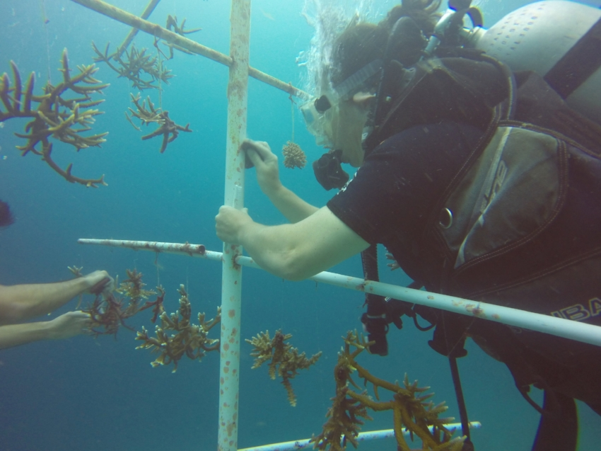 Sealuxe founder, Tanya Droege, caring for a coral tree during a recent scuba diving trip in Raja Ampat.