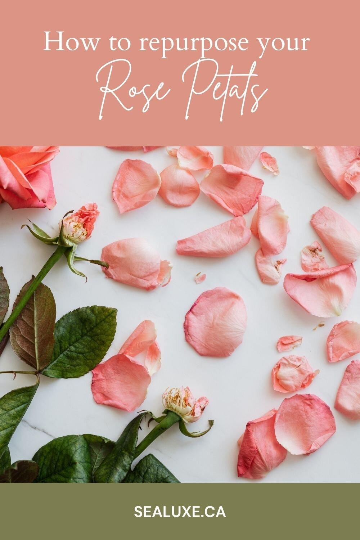 how-to-repurpose-your-rose-petals.jpg