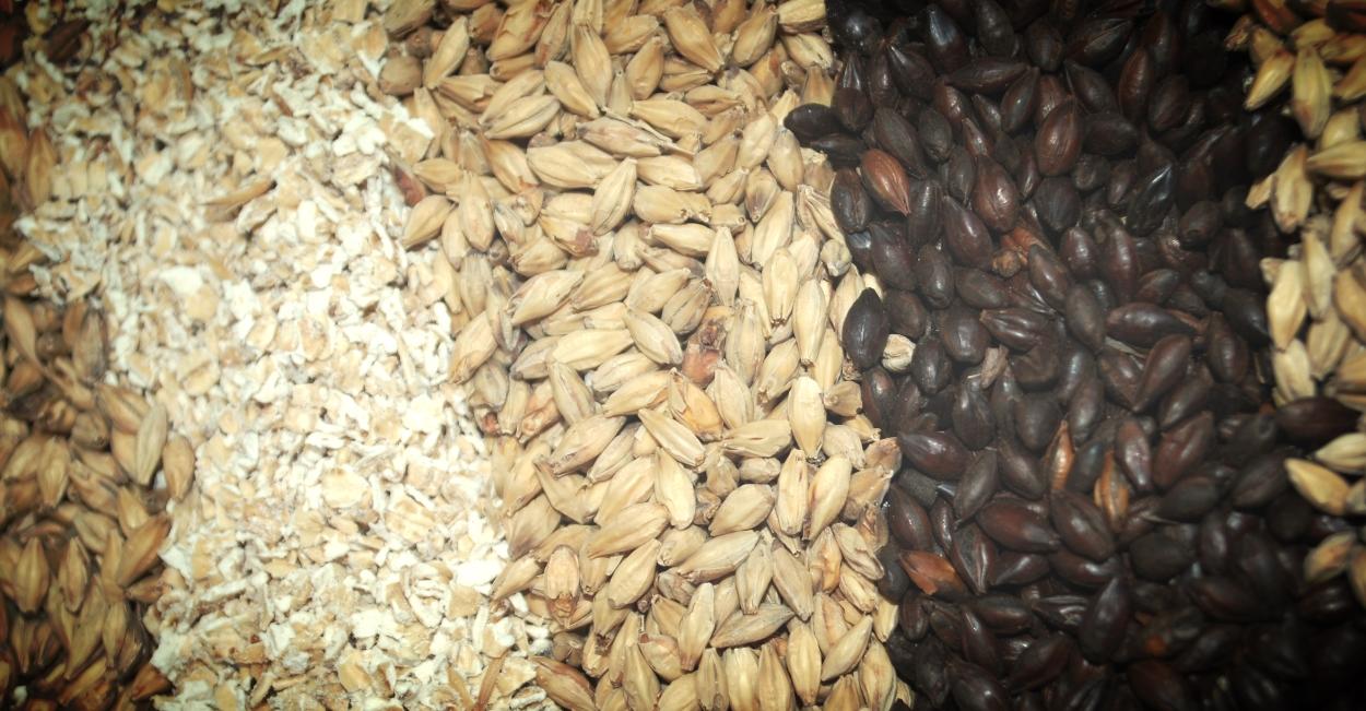 Malt için kullanılan tahıl çeşitleri