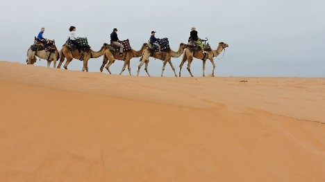 swakop camel.jpg