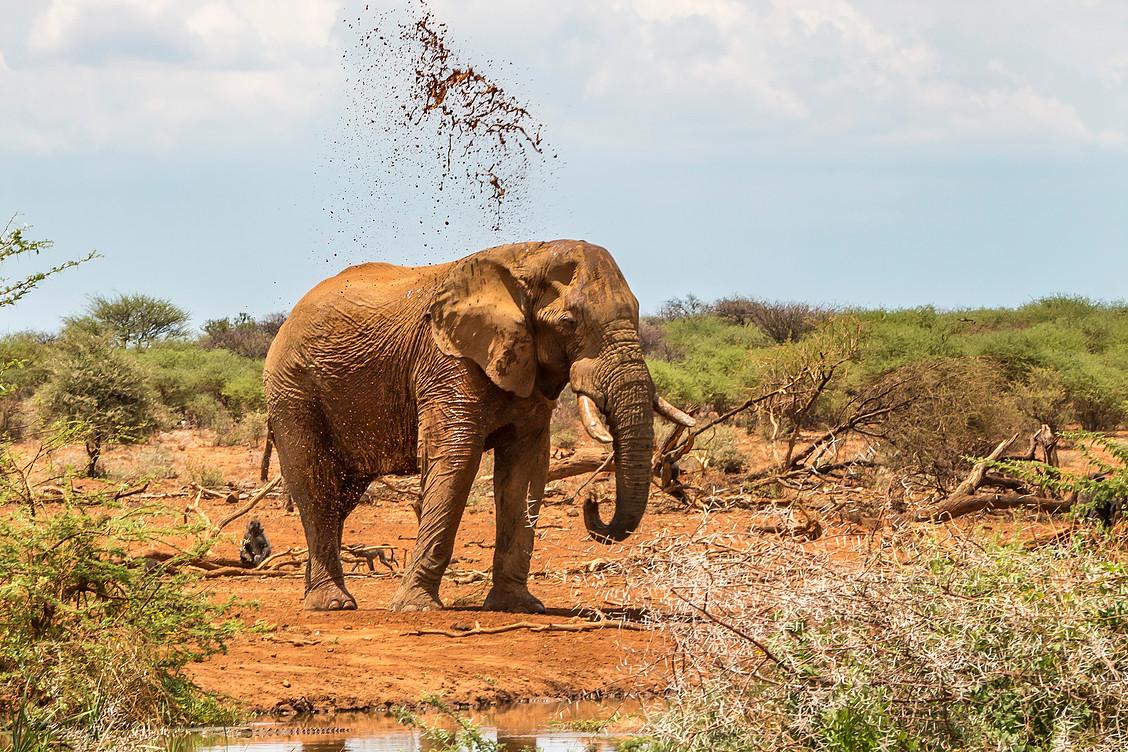 Erindi Elephant2.jpg