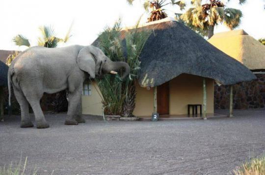 Palmwag Elephant.jpg