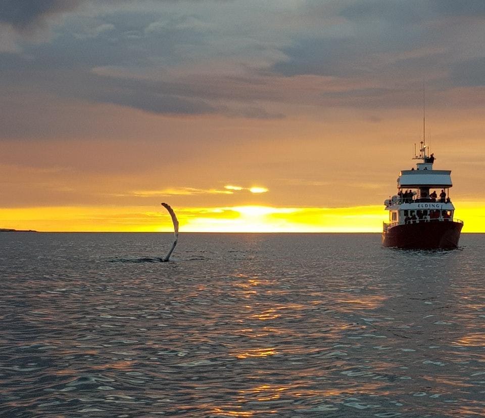 Midnight Sun Whales.jpg