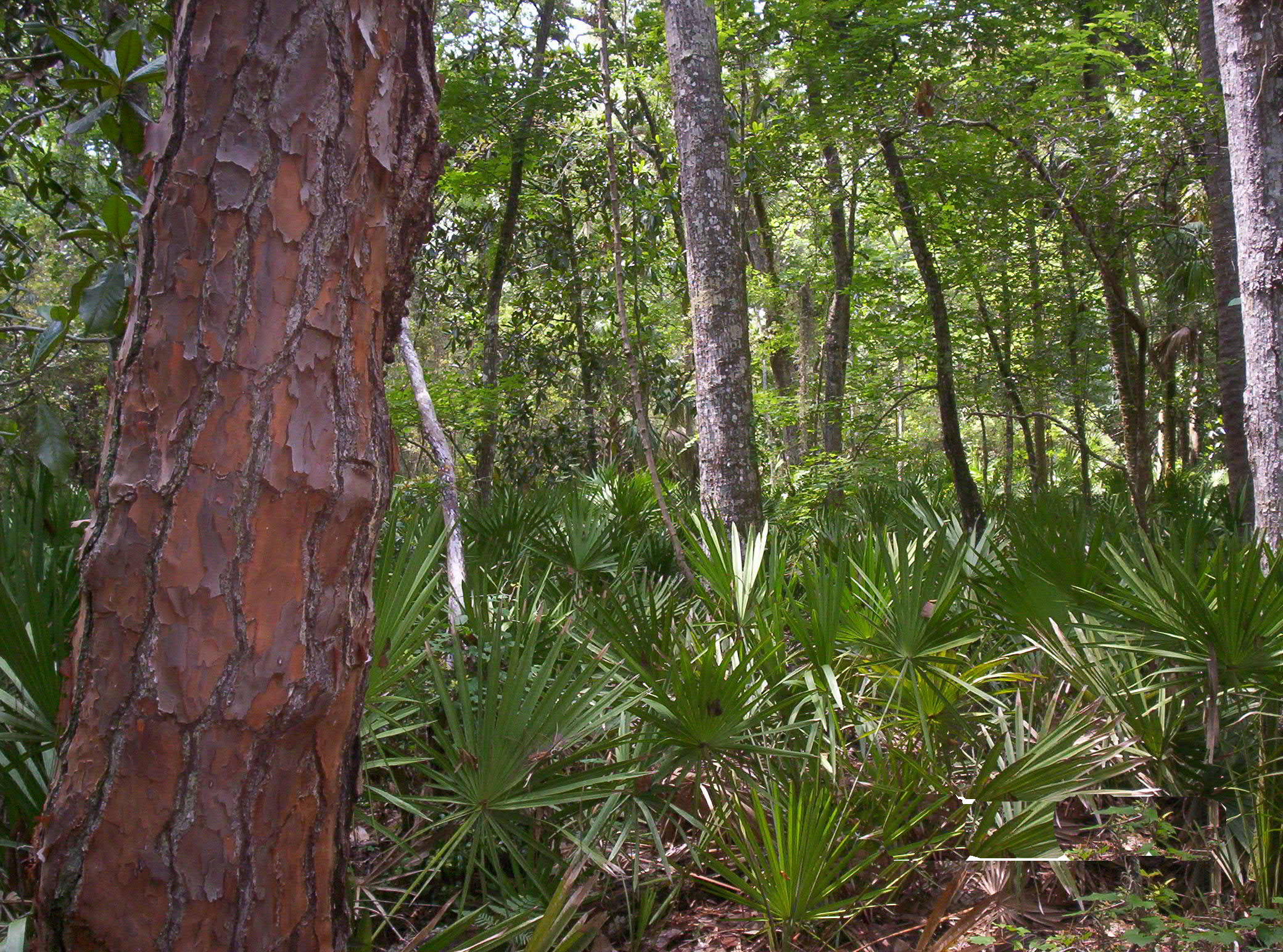 487 acres of riverine habitat restored and preserved
