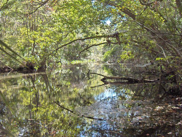 149 acres of freshwater spring habitat restored and preserved