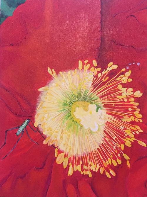 Poppy  12 x 16 acrylic on canvas  $240