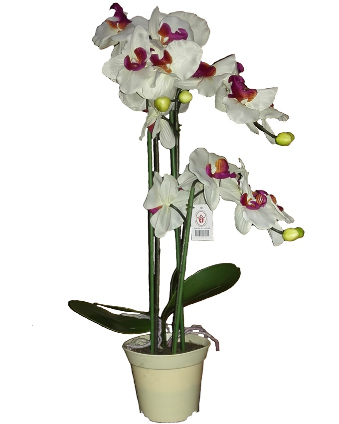moloko orchid in white plastic pot - 57cm   n8,000