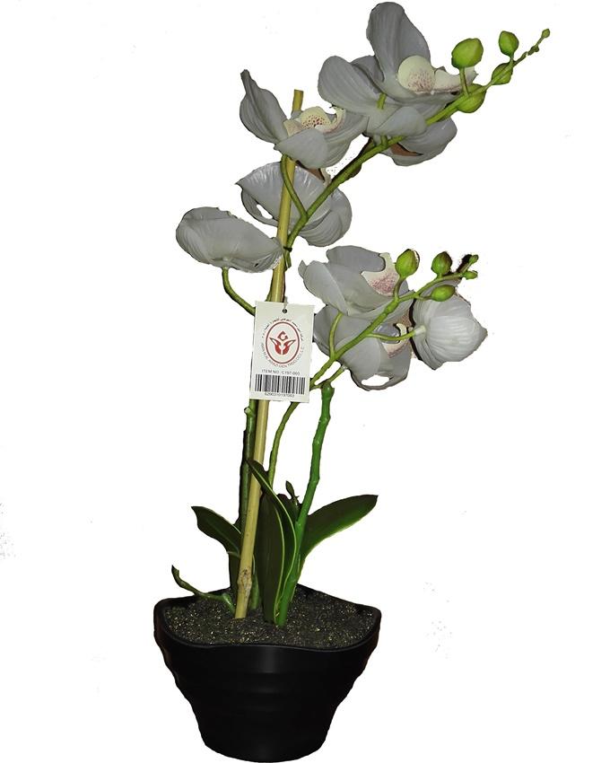 janis orchid in black plastic pot - 48cm   n8,500