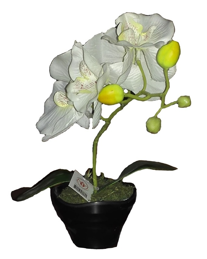 mykos white orchid in plastic pot - 28cm   n3,500