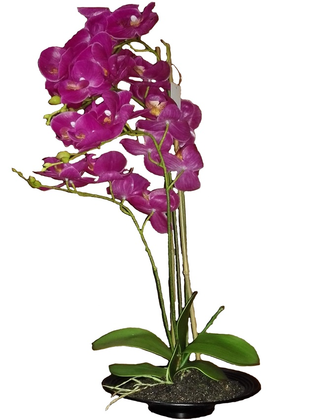 mayfair purple orchid in plastic pot - 70cm   n17,000