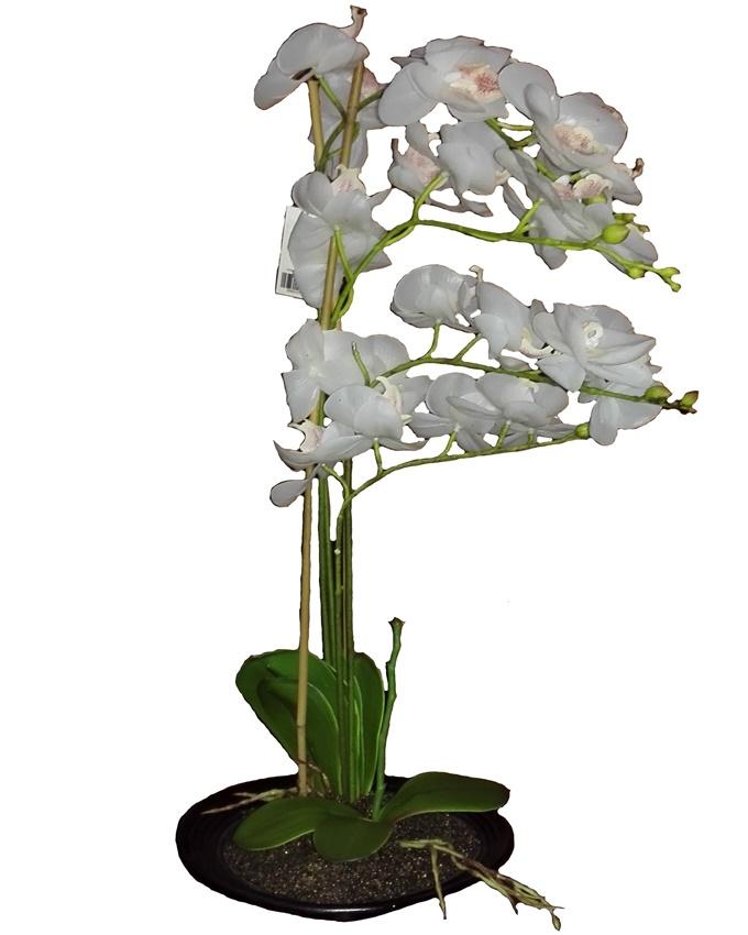 mayfair white orchid in plastic pot - 51cm   n12,000