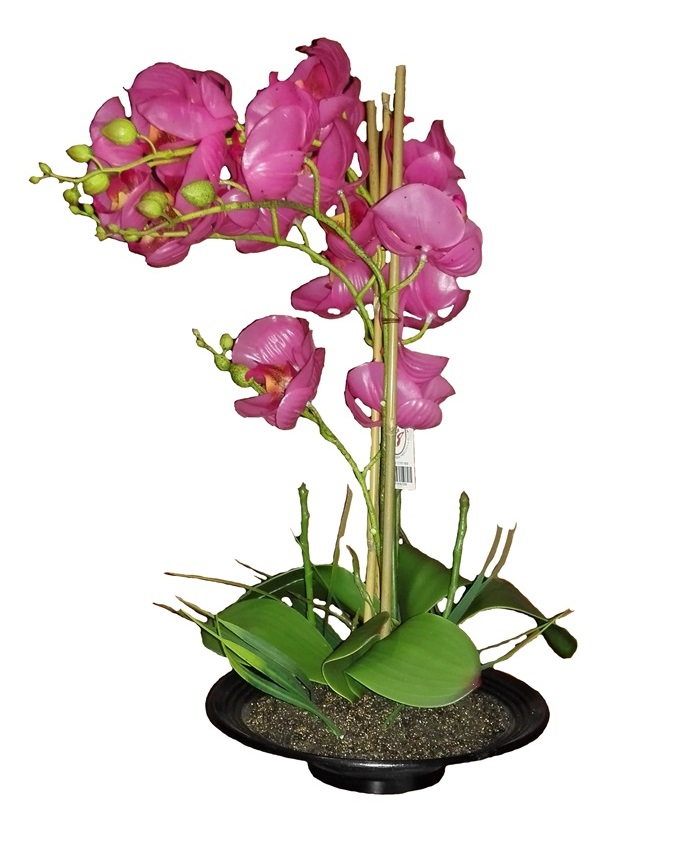 primrose pink orchid in plastic pot - 52cm   n15,000