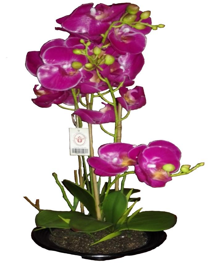 primrose purple orchid in plastic pot - 52cm   n15,000