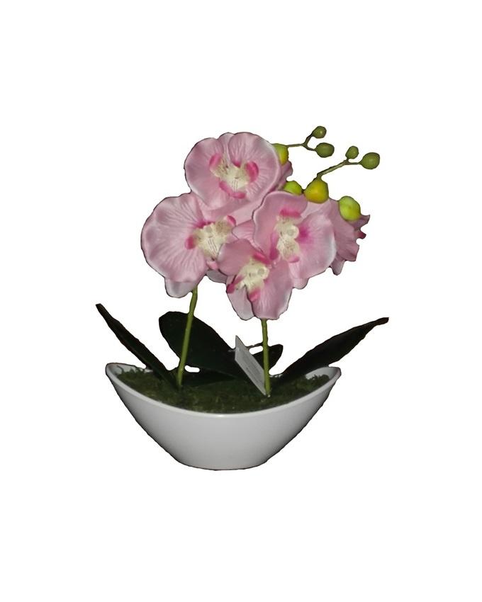 jan pink wild orchid in plastic boat - 30cm   n3,500