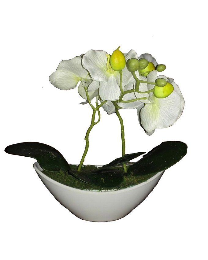 jan white wild orchid in plastic boat - 30cm   n4,000