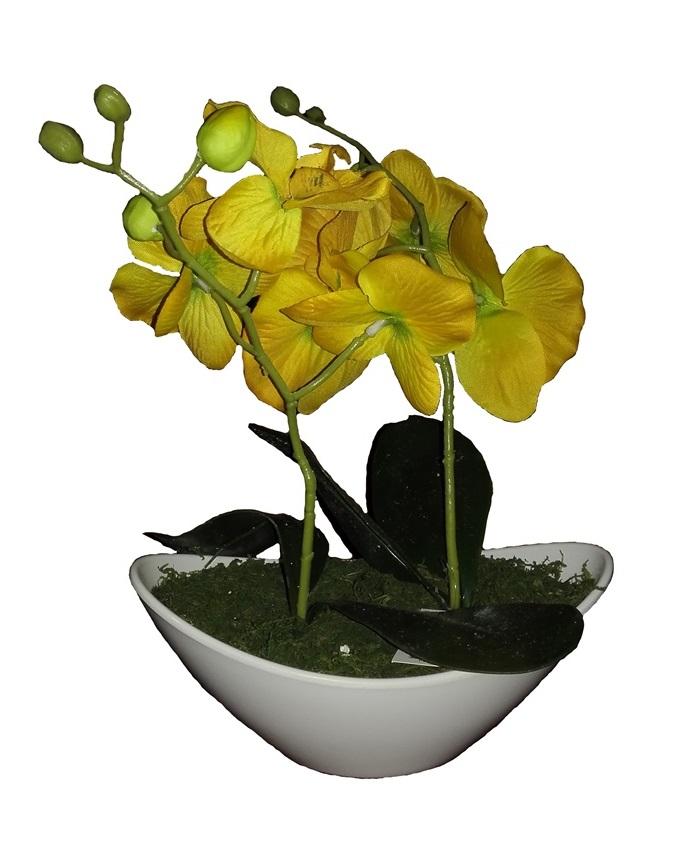 jan yellow wild orchid in plastic boat - 30cm   n4,000