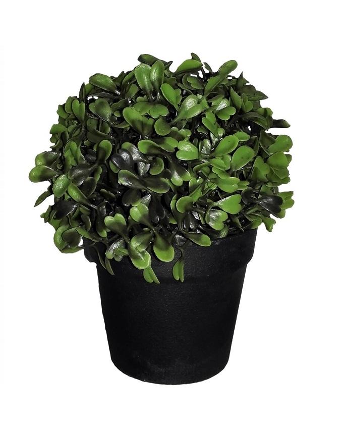 NEW    VENI PLANT IN BLACK PLASTIC POT - 15CM   N3,500