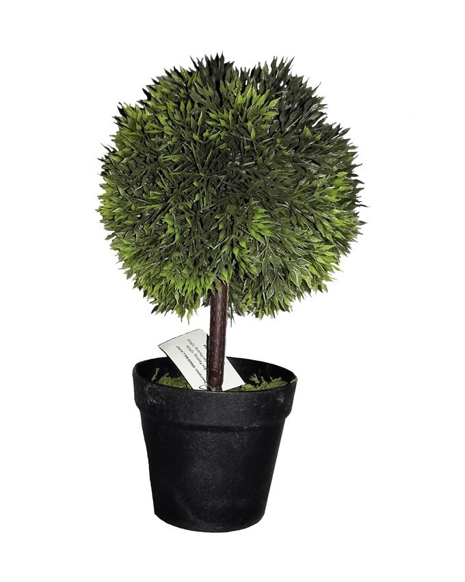 NEW    POOLE GREEN PLANT IN BLACK POT - 24CM   N3,500