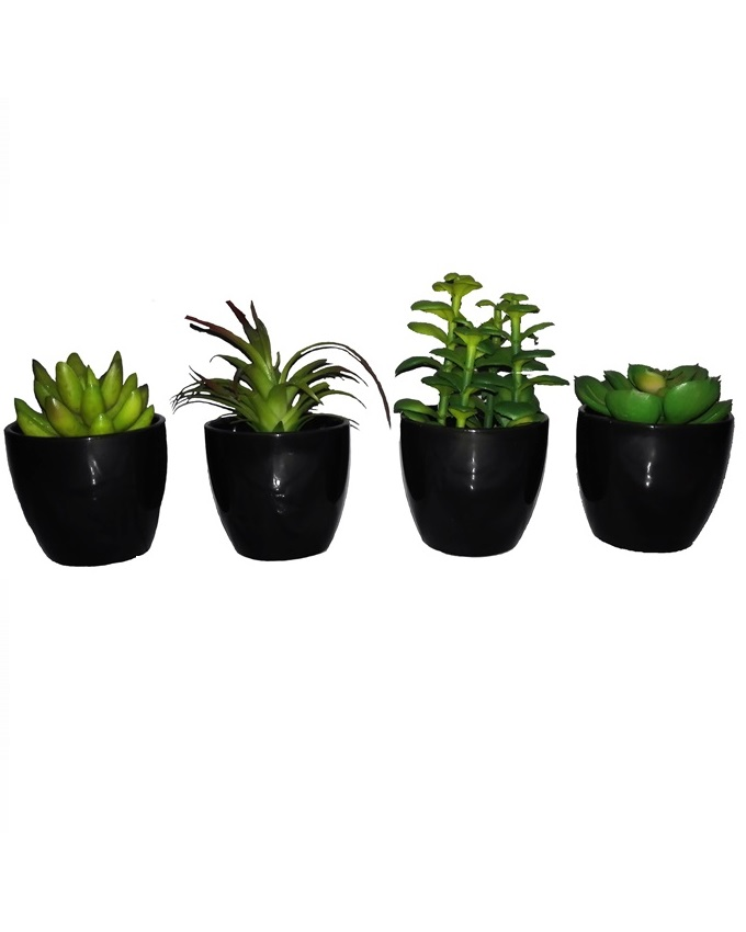 NEW    PACK OF 4 BABY PLANTS IN A BLACK ACRYLIC CUP- 12CM   N10,000