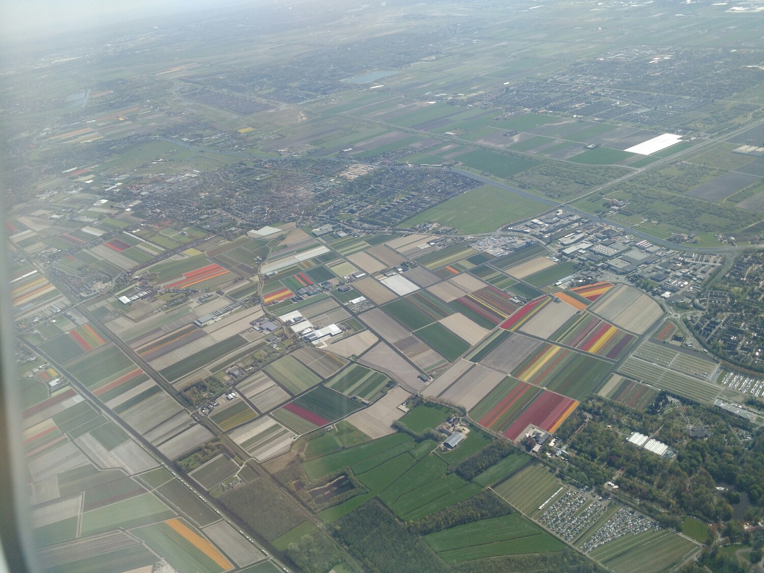 Flying over the colorful tulip fields outside of amsterdam