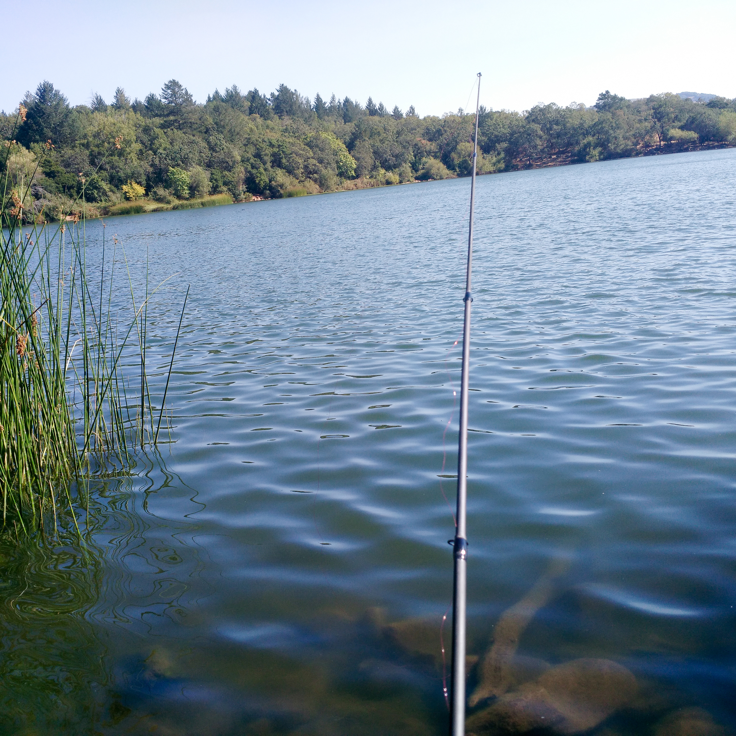 While killing time in California, I decided my life needed a telescopic (collapsible) fishing rod that I could travel with. Then I spent most afternoons catching fish from lakes around Sonoma County. Heaven.