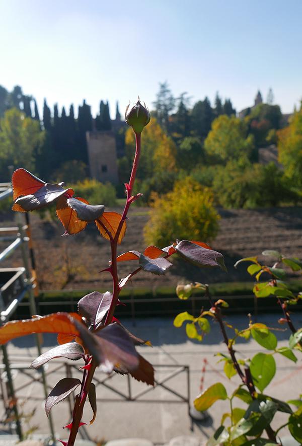 Alhambra_240.jpg