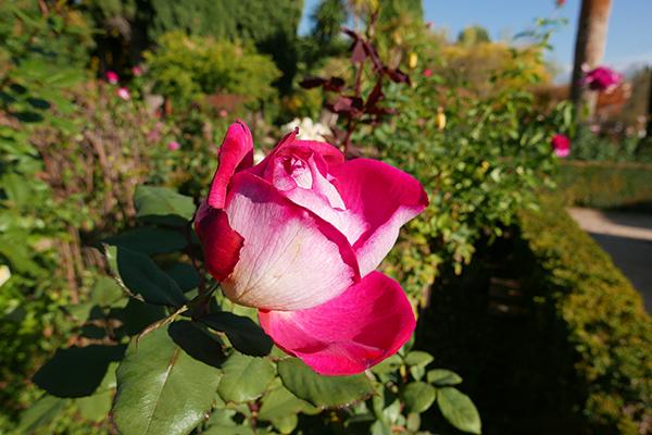 Alhambra_246.jpg