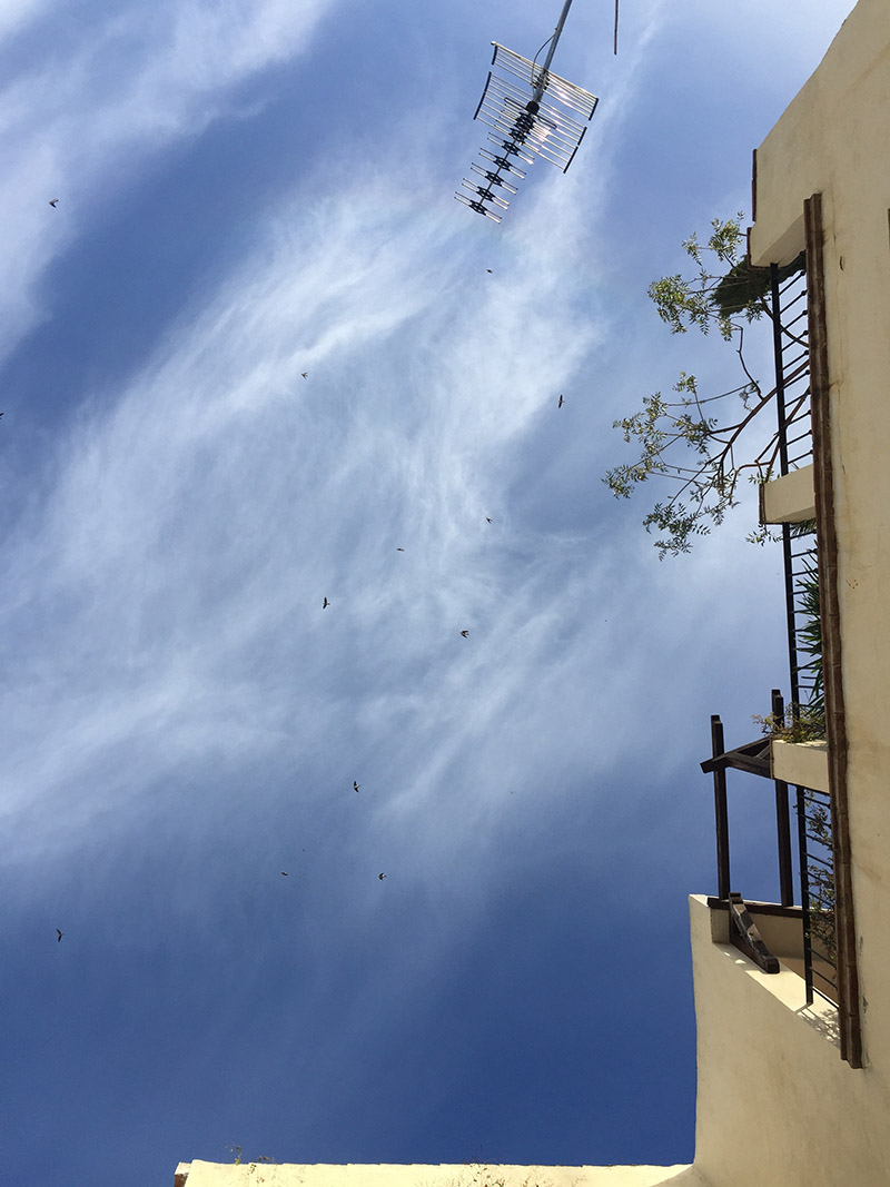 Swallows and Swifts swooping over our terrace