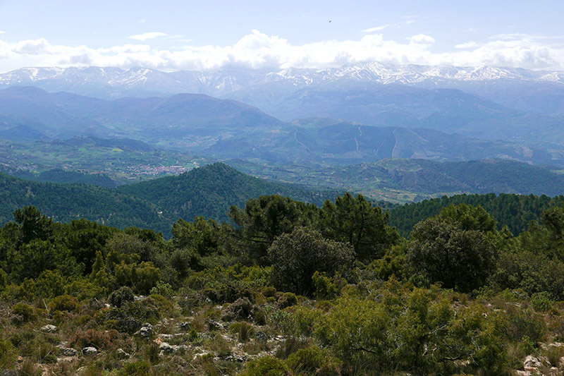 View of the Sierra Nevada mountains from Sierra Huetor.