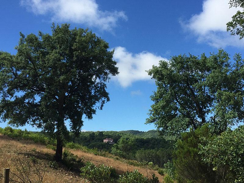 Fince Buenvino nestles amongst cork trees