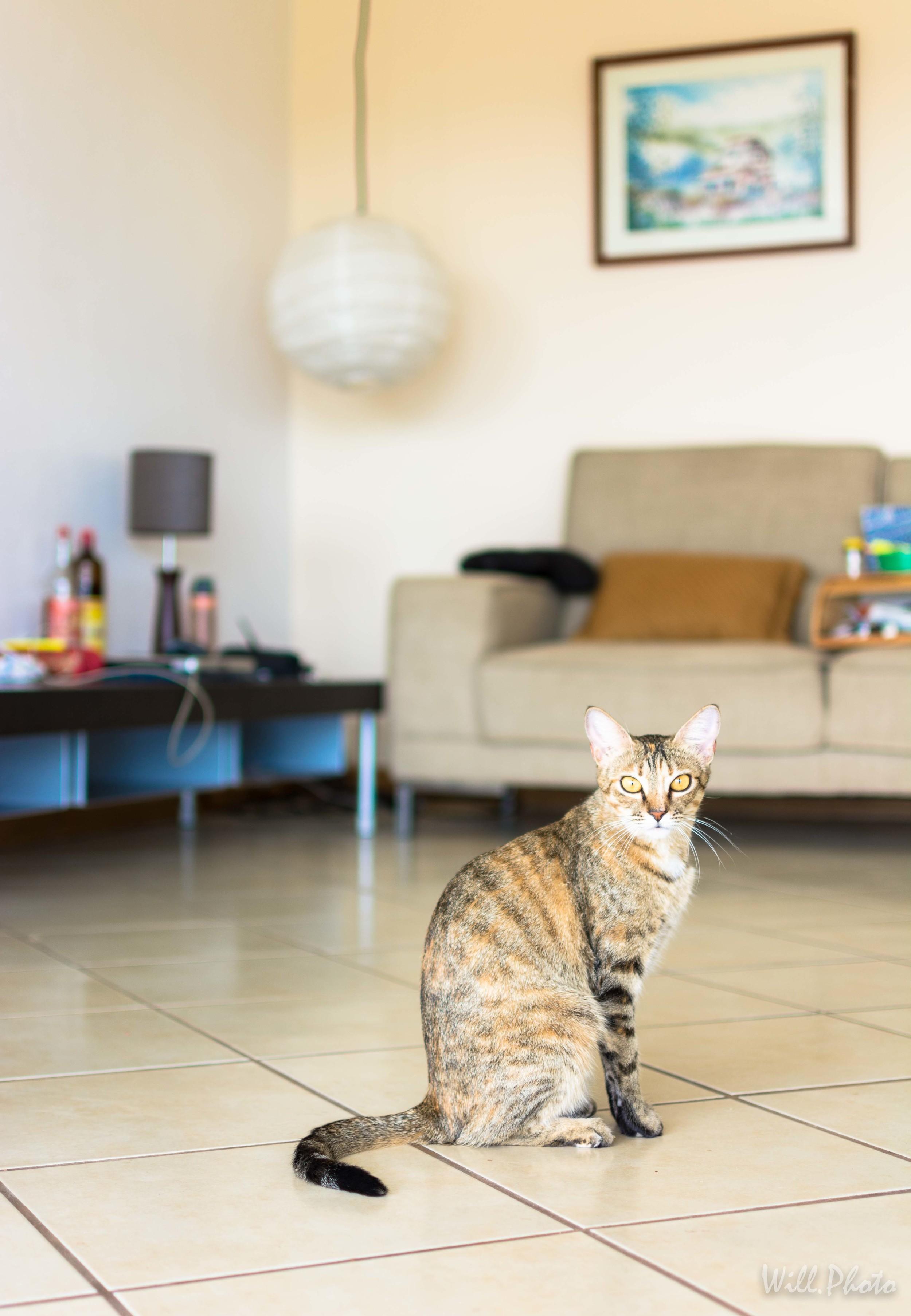 Su gatita, fue otra de nuestras modelos :)